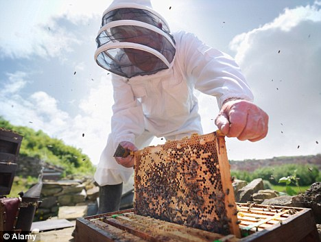 Image for Mobile Phone-Induced Honeybee Worker Piping